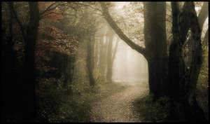 forest_path_____by_mosredna.jpg