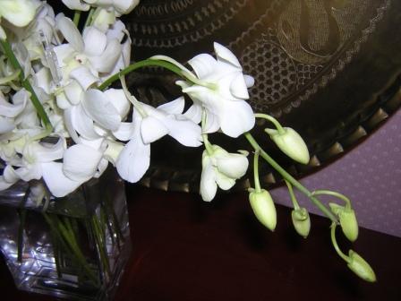 orchids5.JPG