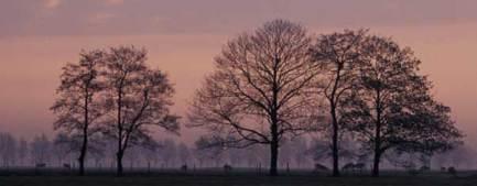 twilighttrees.jpg