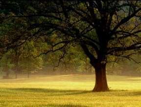 treegoldfield3kj5.jpg