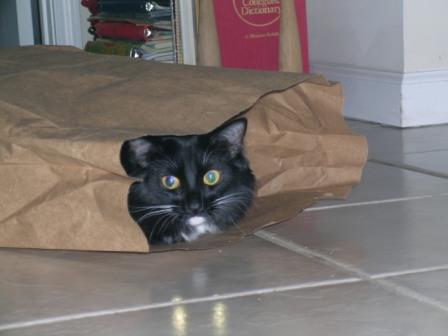 cat-in-a-bag.jpg